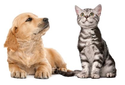 cane_gatto